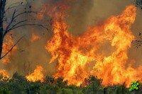 Пожар, горят леса, рвутся мины