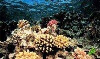 В Красном море создают искусственный риф