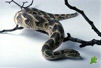 Ядовитые змеи атаковали детсады