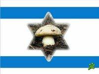 Израиль отправился по грибы