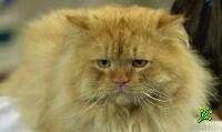 Кошки защищают от инфаркта (фото)