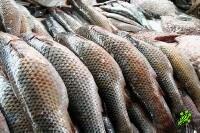 В Израиле запретили употреблять некоторые сорта рыбы