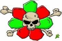 Новый ICQ-вирус