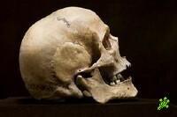 В городском парке Натании найден скелет
