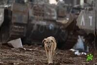 В Израиле разрешен отстрел бродячих собак