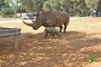 Иск против зоопарка и носорогов