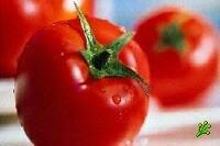 Новая разновидность насекомых в помидорах
