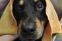 Бешеная собака в районе Афулы