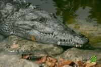 Йом-Кипур для Израильских крокодилов