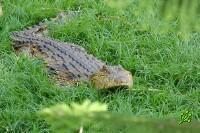 ВВС ЦАХАЛа возбуждают крокодилов