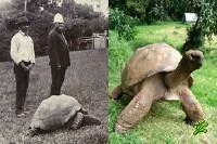 Старейшему жителю Земли 178 лет