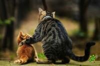 21 совет молодому коту