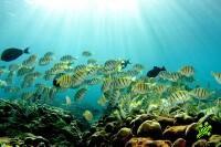 Таблетка из коралла защитит от солнца