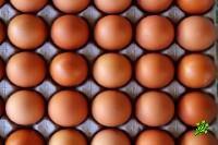 Яйца в Израиле подорожали на 5%